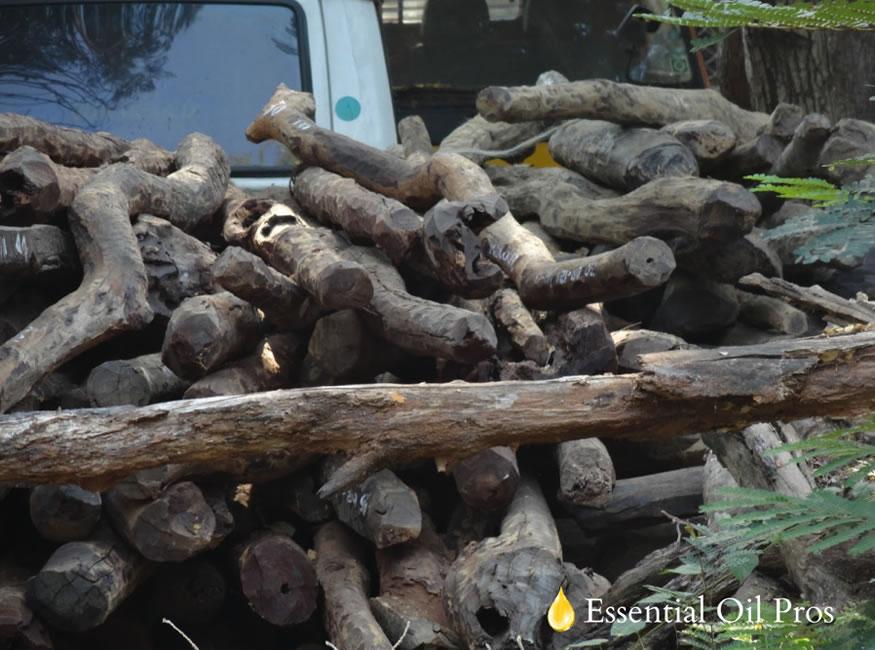 Sandalwood-Logs